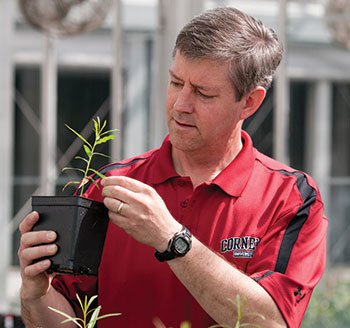 Larry Smart looks at a willow seedling